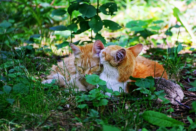 Gato e gatinho que colocam na grama alta, grossa fotos de stock royalty free