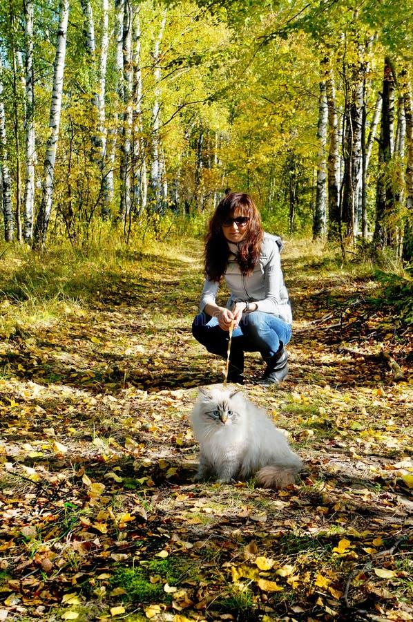 Gato e jovem mulher nevsky Siberian do masqarade fotografia de stock royalty free