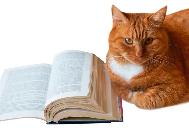 Gato e livro vermelho, livro de leitura do gato, livro aberto e ao lado de um gato de casa vermelho, livro-u-volta imagem de stock