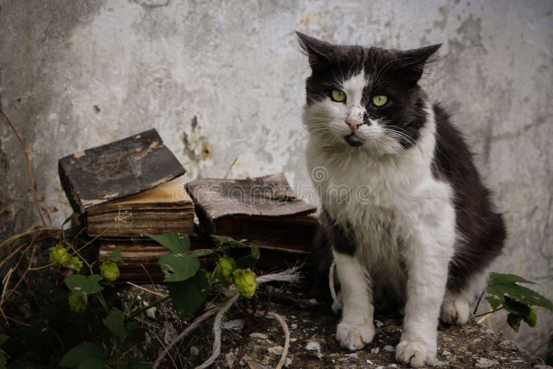gato e livros desabrigados imagens de stock