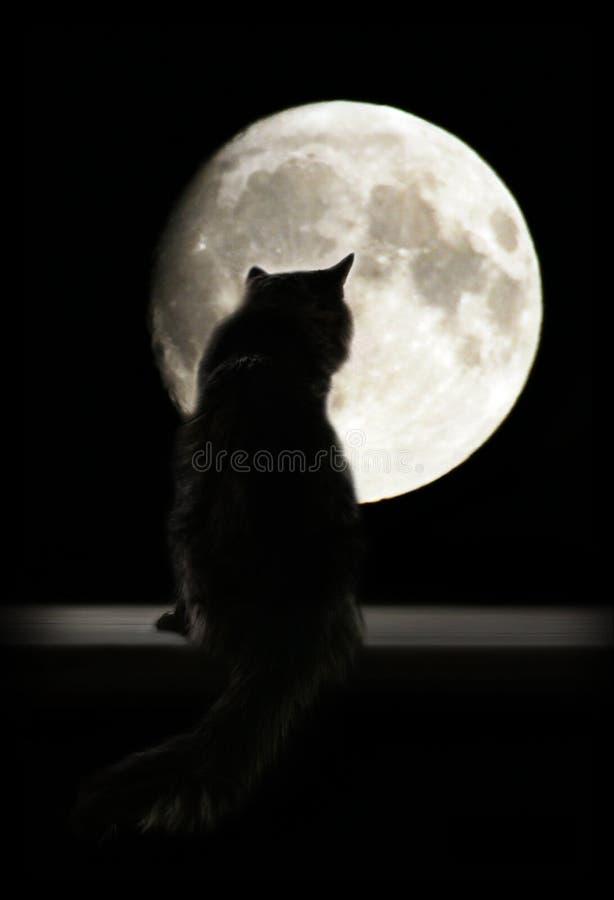 Gato e lua imagem de stock royalty free