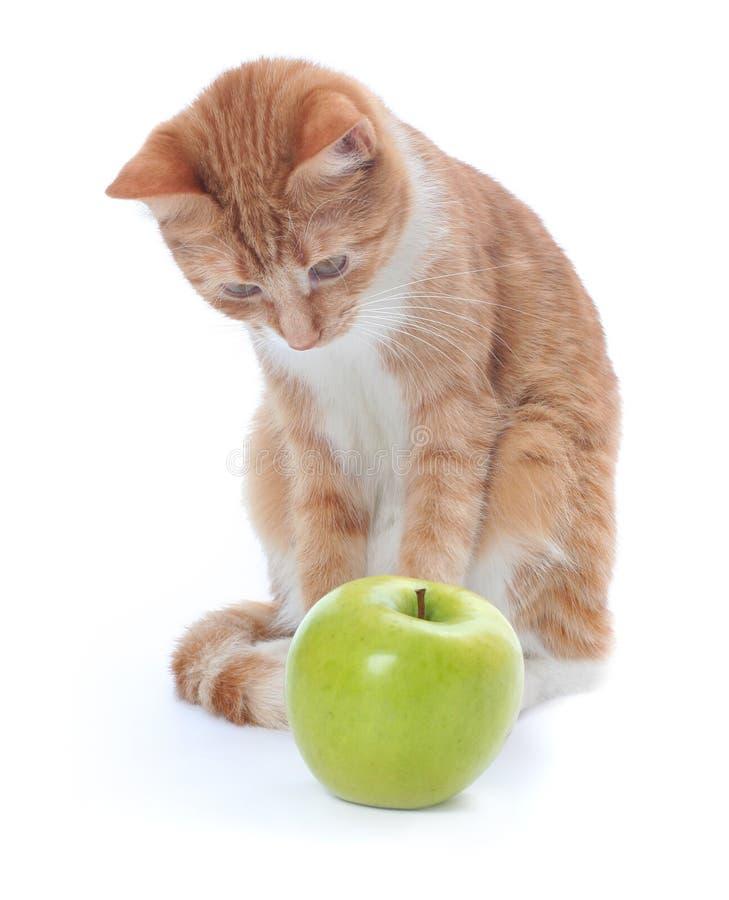 Gato e maçã imagem de stock