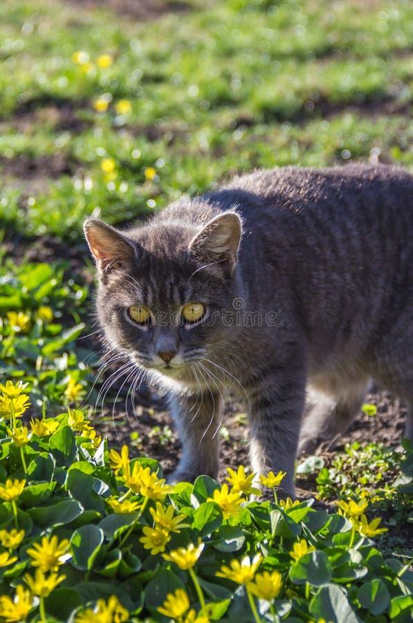 Gato e mola Gato e flores Retrato do gato cinzento fotos de stock