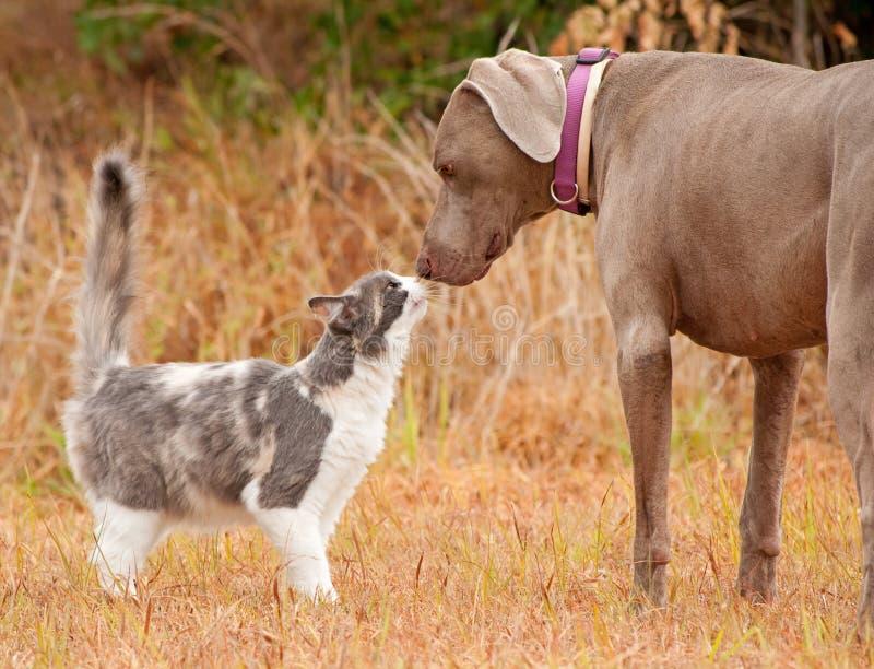 Gato e narizes grandes sniffing do cão imagens de stock royalty free