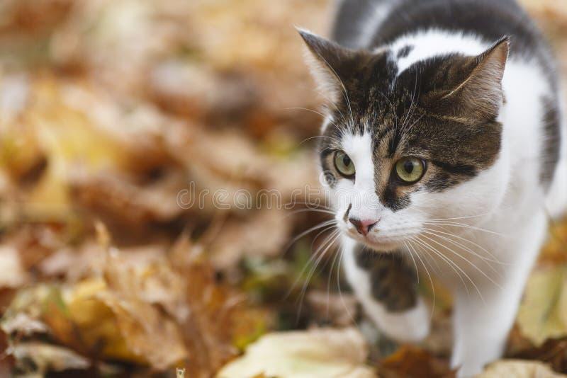 Gato e outono imagens de stock