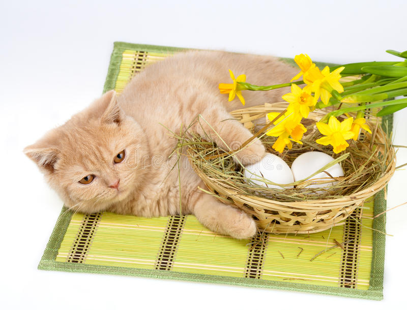 Gato e ovos da páscoa fotografia de stock