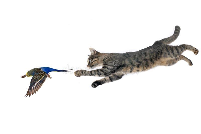 Gato e papagaio fotos de stock royalty free