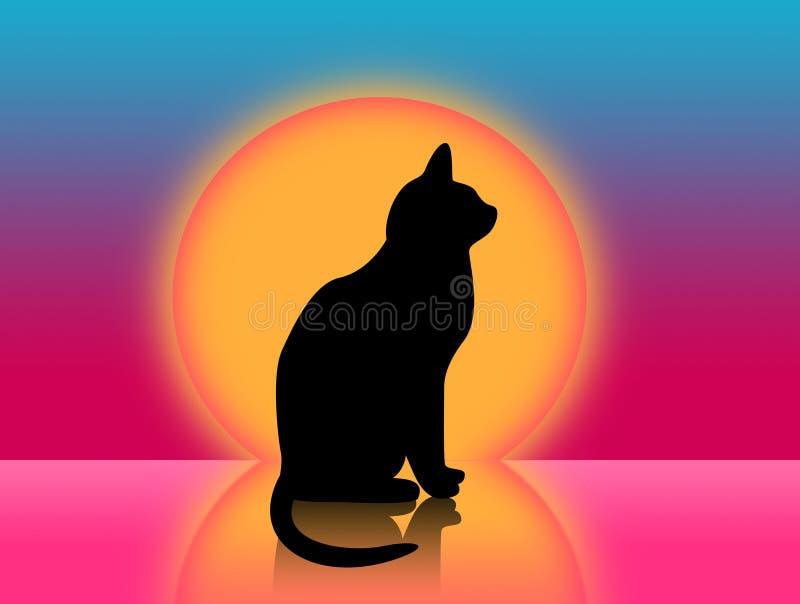 Gato e por do sol