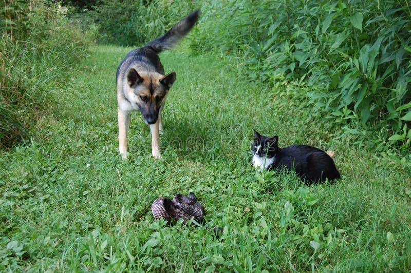Gato e serpente do cão imagem de stock