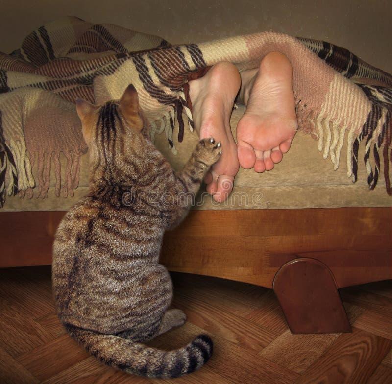 Gato e seu proprietário de sono imagem de stock royalty free