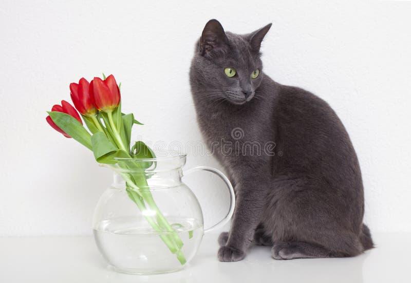 Gato e tulips cinzentos imagens de stock royalty free
