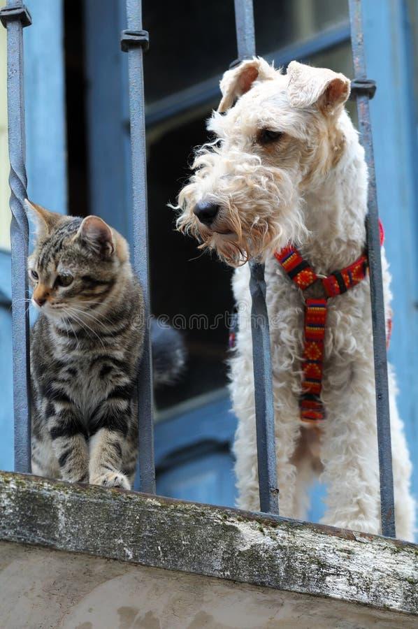 Gato e um cão foto de stock