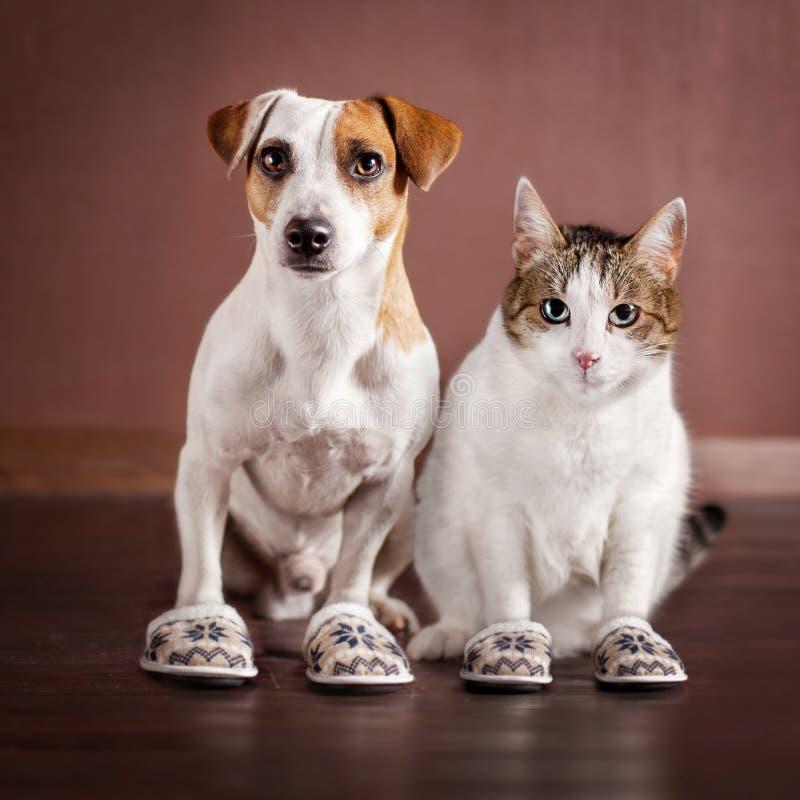 Gato e um cão nos deslizadores imagens de stock