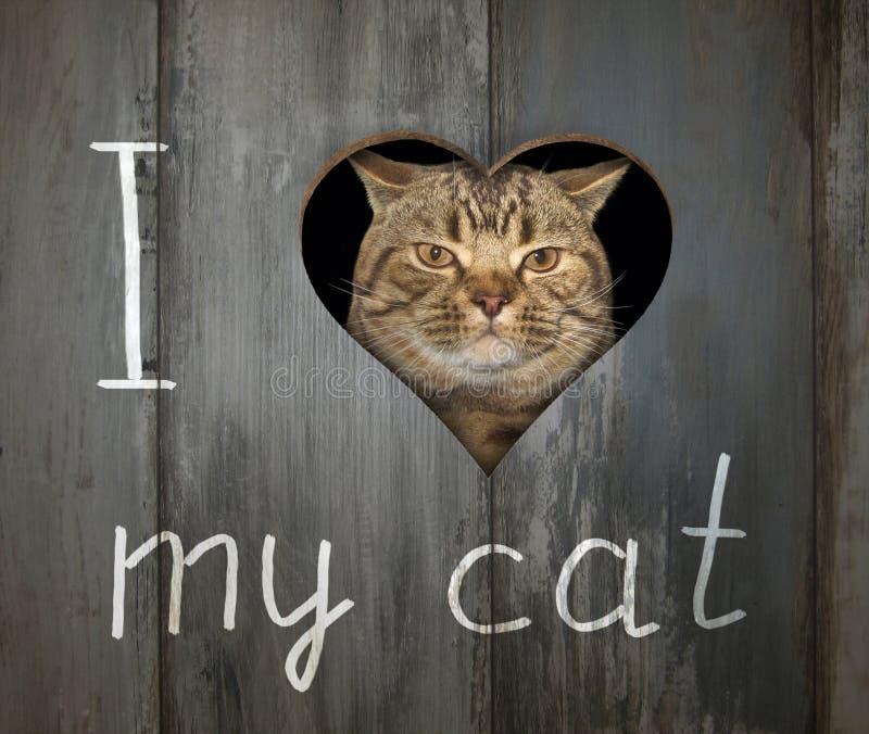 Gato e um furo na cerca imagens de stock royalty free