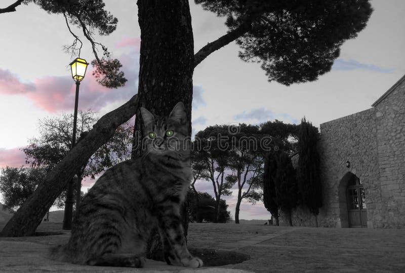 Gato e uma igreja imagem de stock