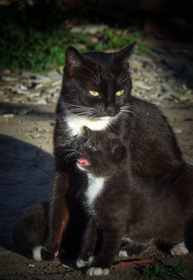 gato e uma vaquinha pequena foto de stock royalty free