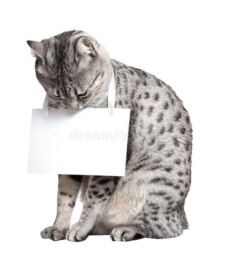 Gato egípcio bonito de Mau foto de stock