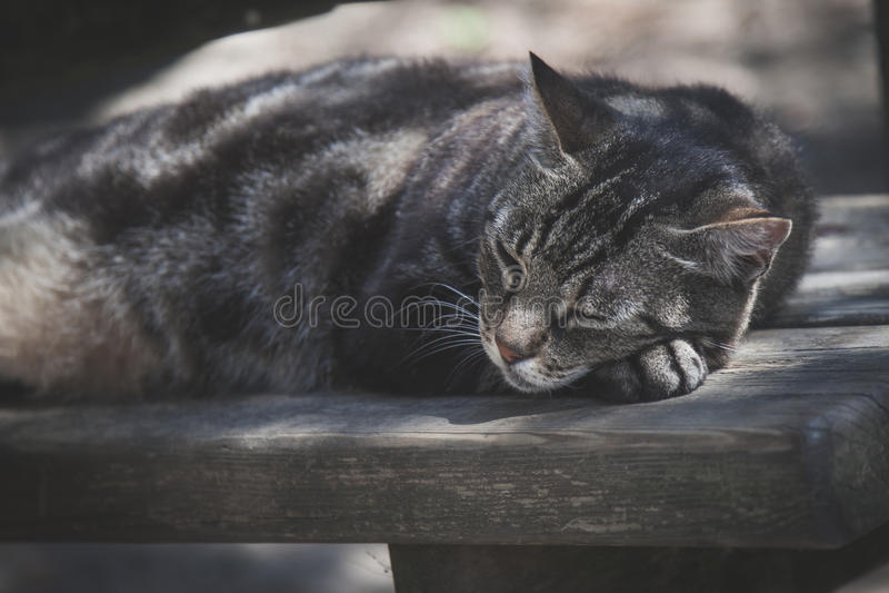 Gato el dormir en el retrato del banco de madera fotos de archivo libres de regalías