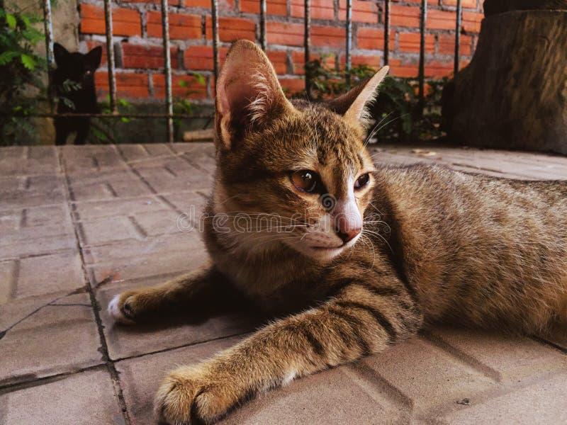 Gato elegante foto de archivo