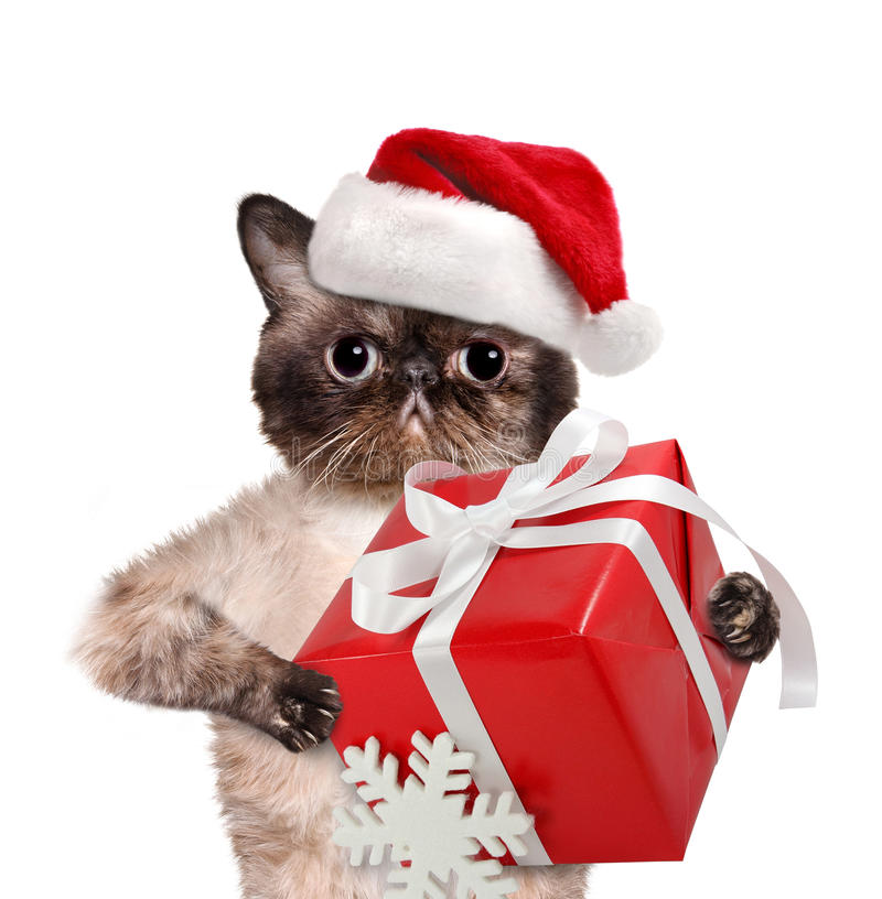 Gato em chapéus vermelhos do Natal com presente foto de stock royalty free