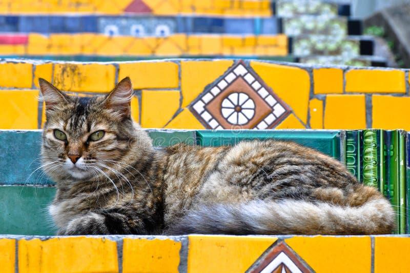 Gato em escadas imagem de stock royalty free