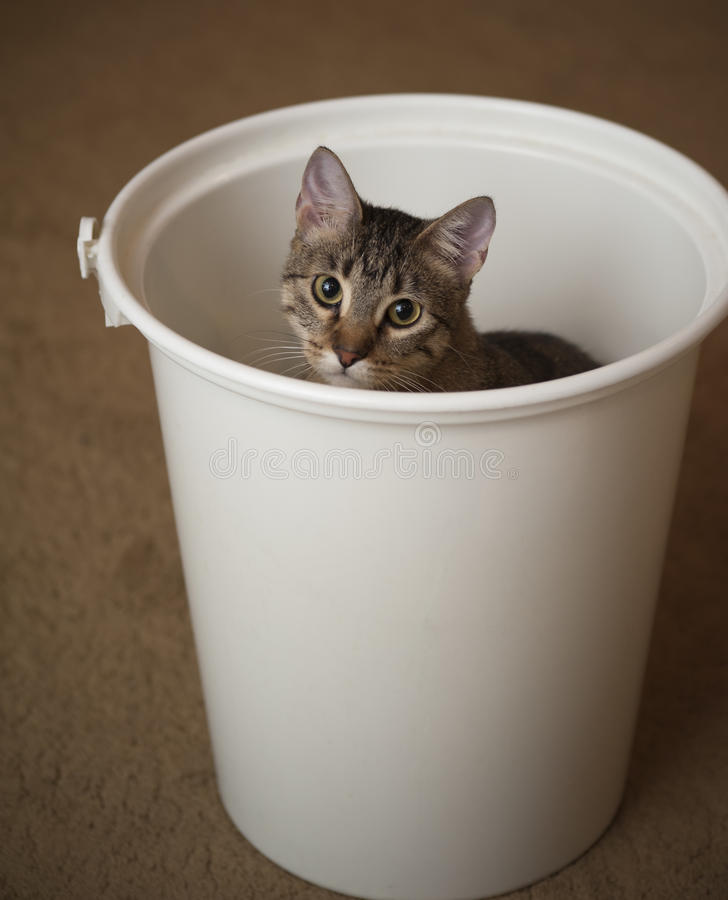 Gato em um balde do tecido foto de stock