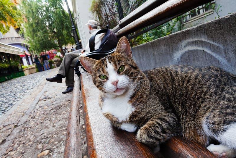 Gato em um banco de madeira fotografia de stock royalty free