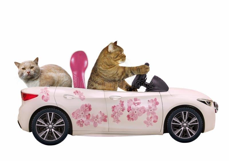 Gato em um carro cor-de-rosa com um passageiro ilustração stock