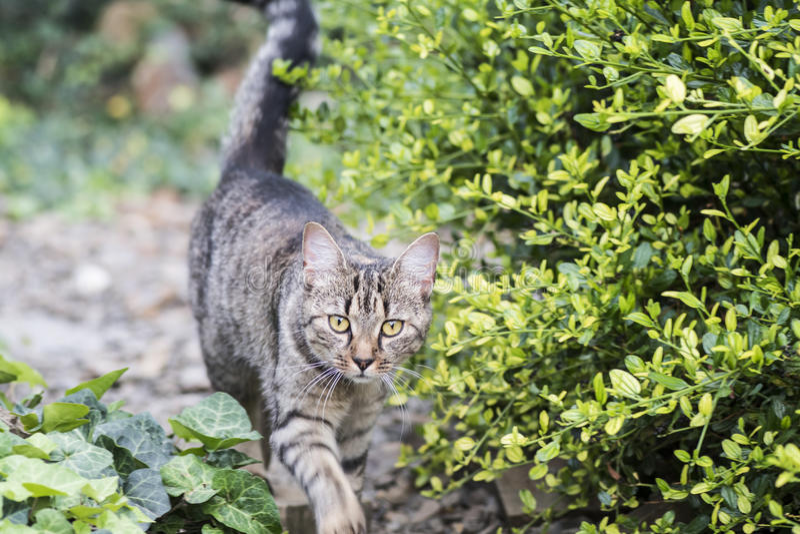 Gato em um jardim imagens de stock