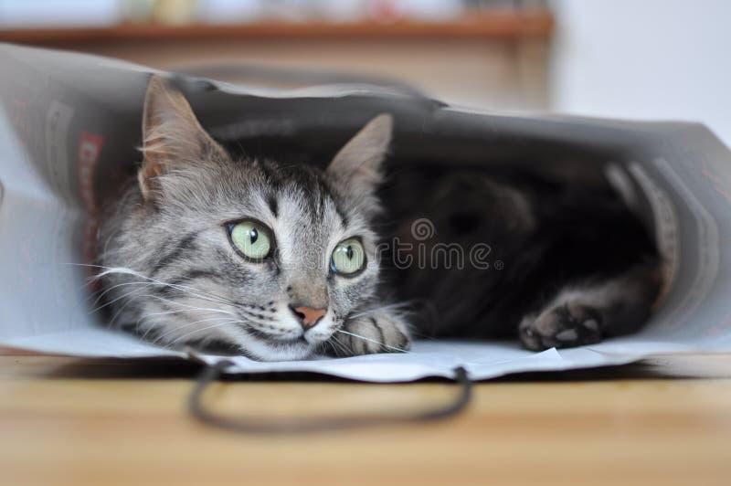 Gato em um saco foto de stock royalty free