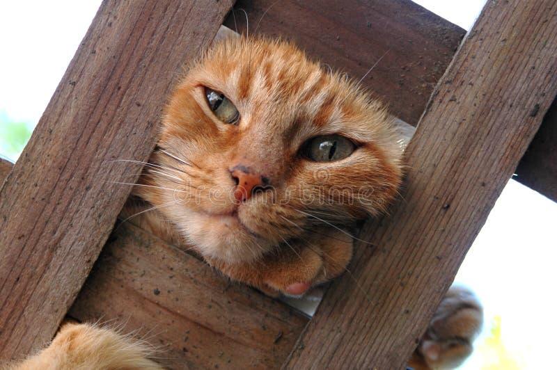 Gato em um Trellis foto de stock