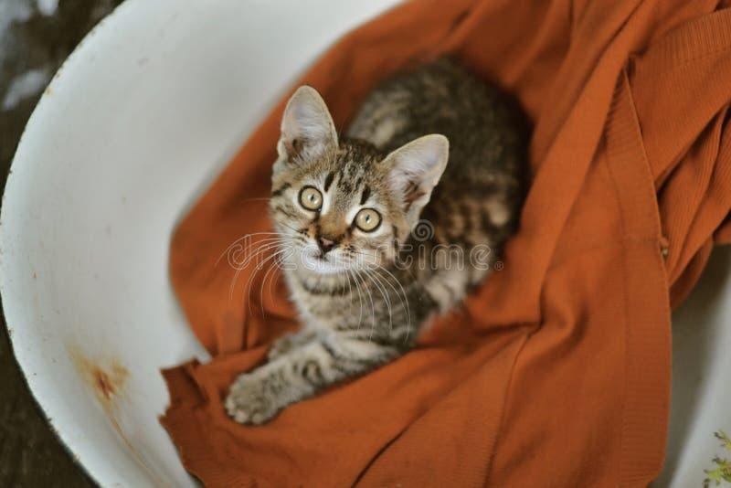 Gato em uma bacia fotografia de stock royalty free
