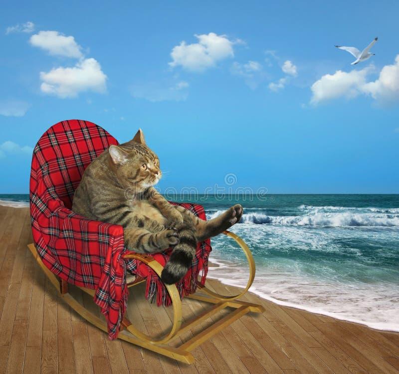 Gato em uma cadeira de balanço na praia fotografia de stock royalty free