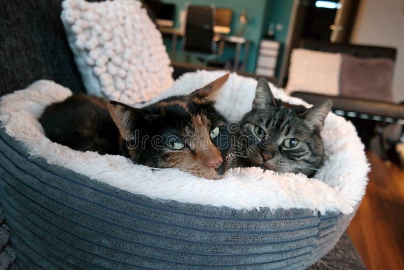 Gato em uma cama macia imagens de stock