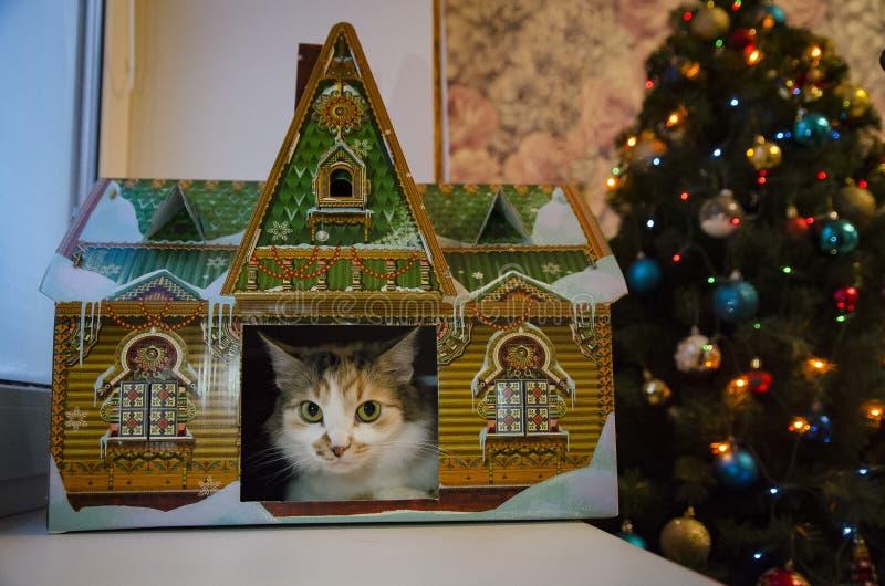 Gato em uma casa do brinquedo imagem de stock royalty free