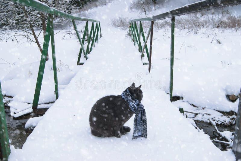 Gato em uma ponte fotos de stock