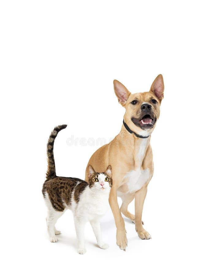 Gato emocionado y perro junto que parecen para arriba imagen de archivo libre de regalías
