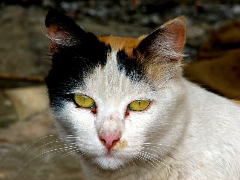 Gato emocional fotos de archivo