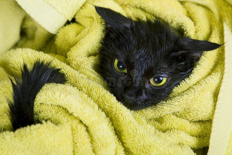 Gato empapado negro después del baño fotografía de archivo libre de regalías