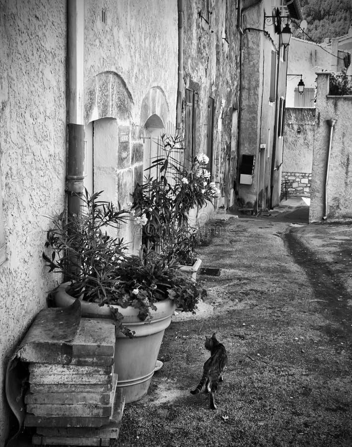 Gato en calle vieja francesa de la ciudad imagen de archivo