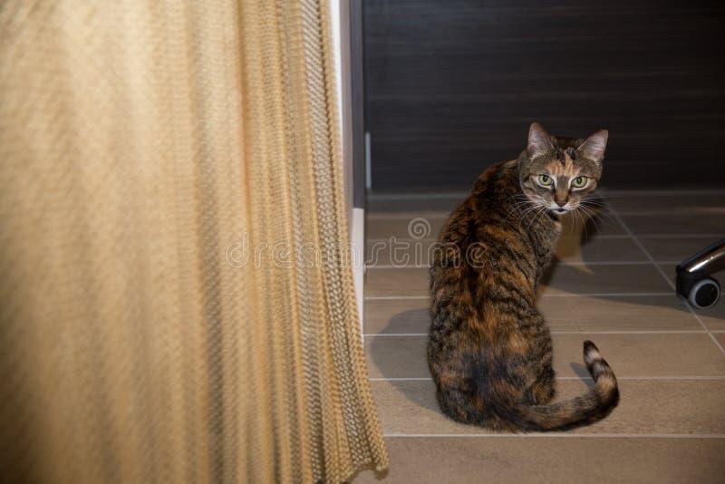 Gato en casa foto de archivo libre de regalías
