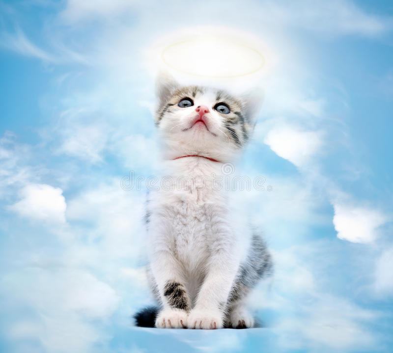 Gato en cielo fotos de archivo