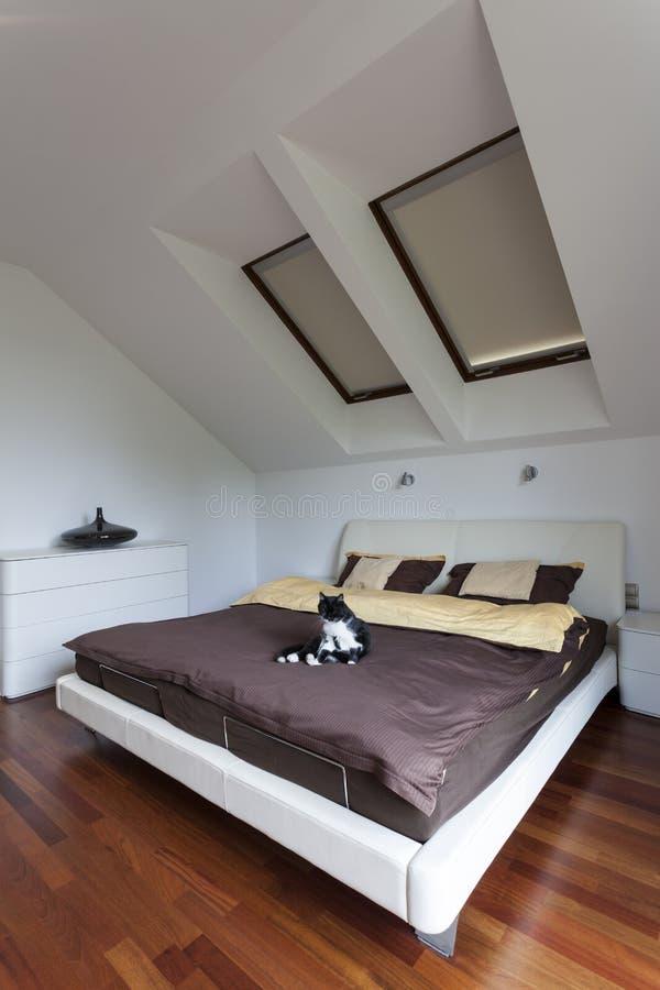 Gato en dormitorio foto de archivo