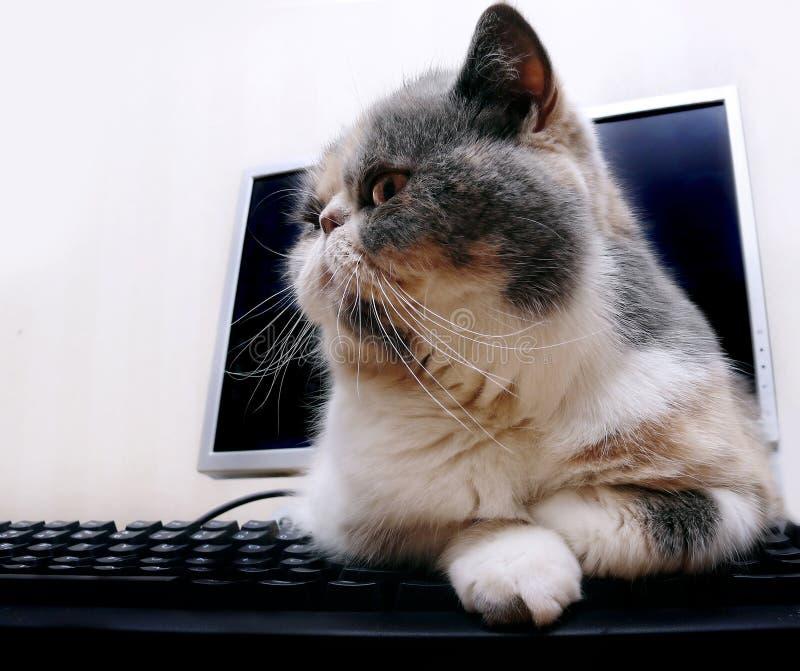Gato en el ordenador fotografía de archivo