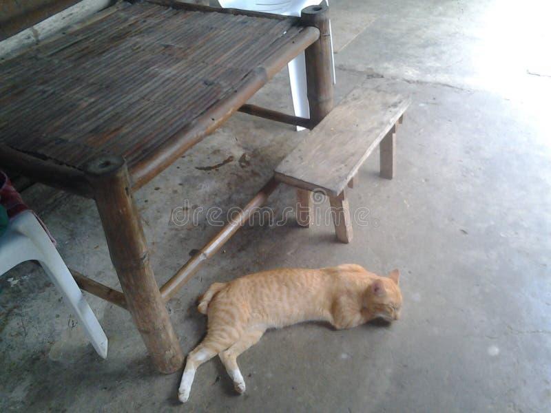 Gato en el piso fotografía de archivo