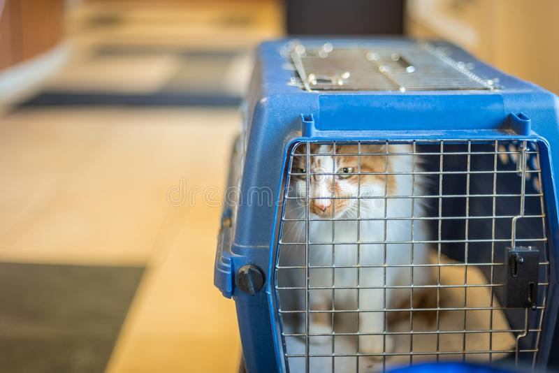 Gato en el portador que mira hacia fuera el hospital veterinario fotografía de archivo libre de regalías