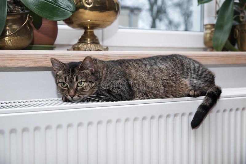 Gato en el radiador, caliente, gato de gato atigrado que miente un radiador caliente imagen de archivo
