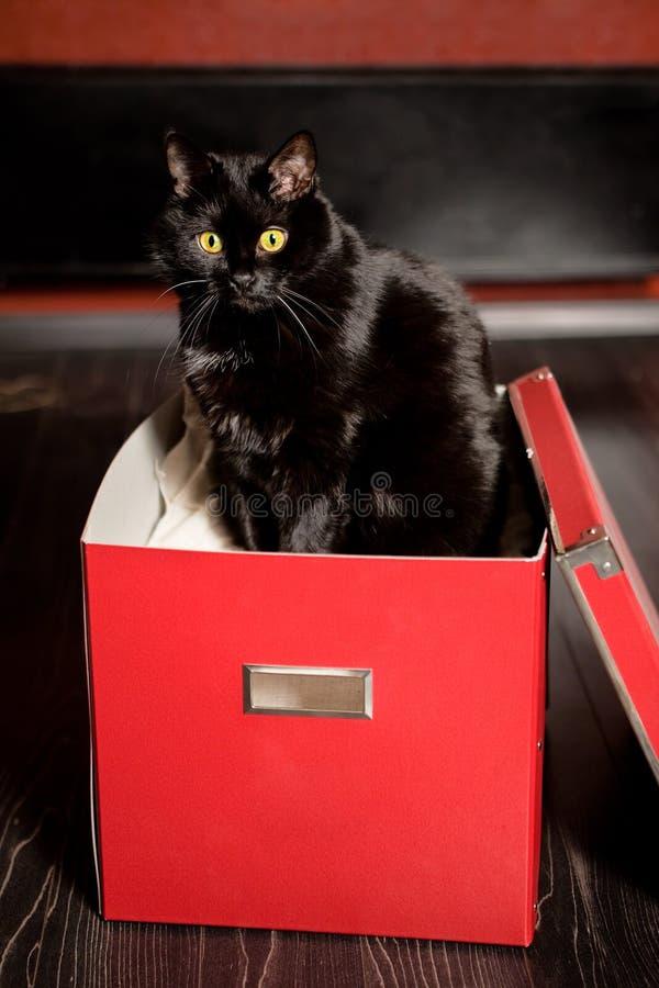 Gato En El Rectángulo Foto de archivo