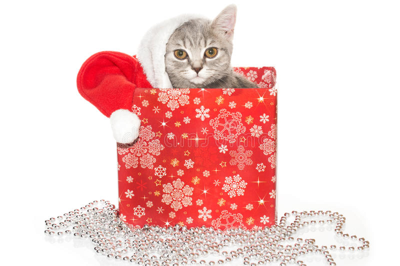 Gato en el sombrero Papá Noel en una caja en el fondo blanco fotos de archivo