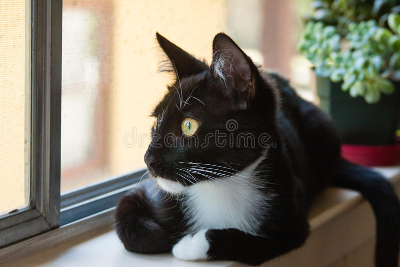Gato en el travesaño de la ventana que mira hacia fuera la ventana imagenes de archivo